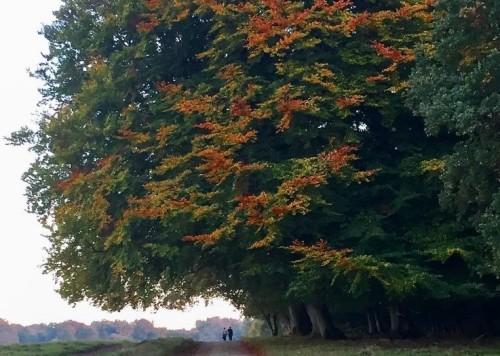 Naturtræ - Forbillede